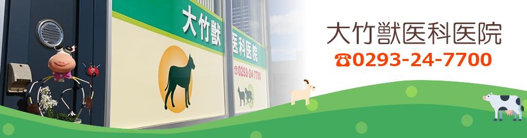 大竹獣医科医院は北茨城市の動物病院です。